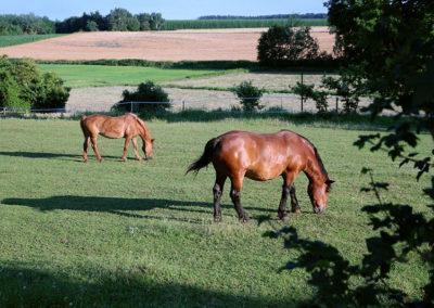 Landschaft mit Pferden